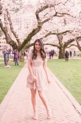 Tips For How To See UW Cherry Blossoms Next Year