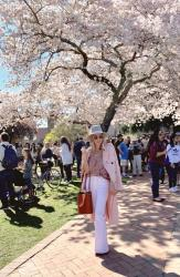Visiting the Cherry Blossoms!